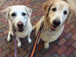 Furry_Sasha and Winnie_2